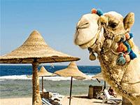 Едем на отдых в Египет