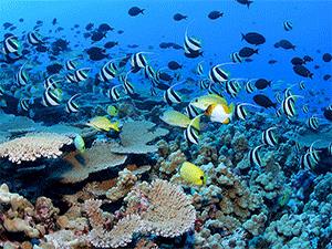Подводный туризм в Хургаде