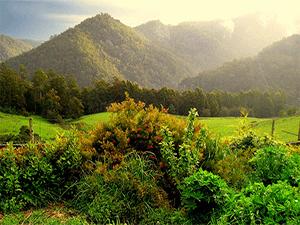 Путешествие по Тасмании