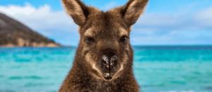 Как получить ПМЖ в Австралии в 2021 году