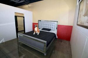 hotel+dog