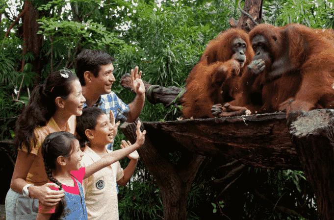 Запрет на кормление обезьян
