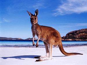 Символ Австралии