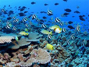 Подводная жизнь в Хургаде
