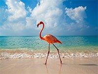 Виртуальный тур по пляжам Доминиканы